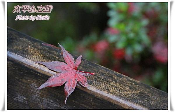 太平山12.JPG