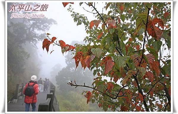 太平山15.JPG