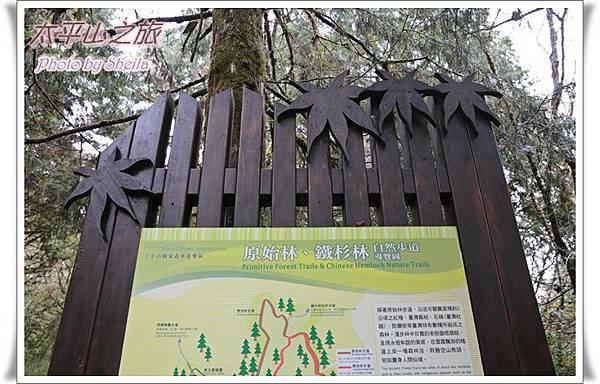 太平山37.JPG