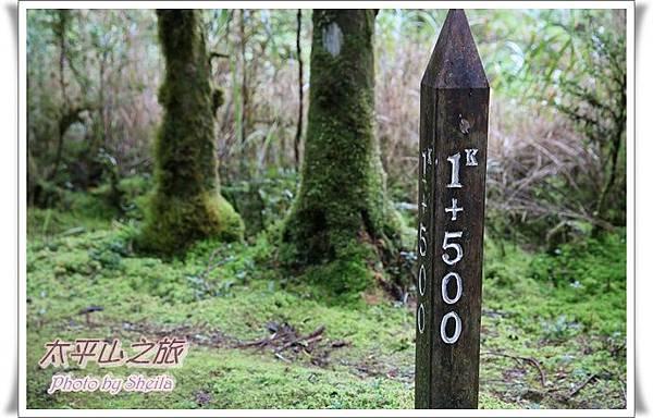 太平山224.JPG