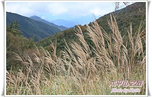 太平山228.JPG