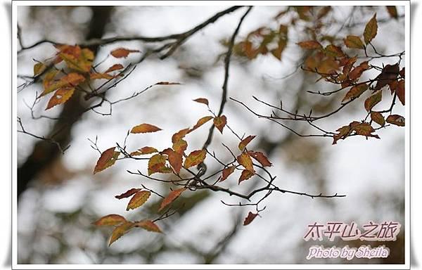 太平山229.JPG