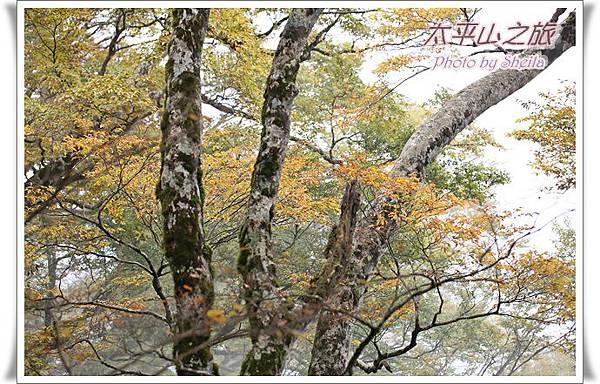 太平山237.JPG