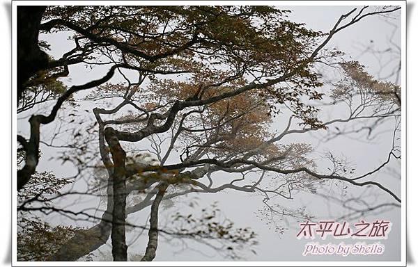太平山239.JPG