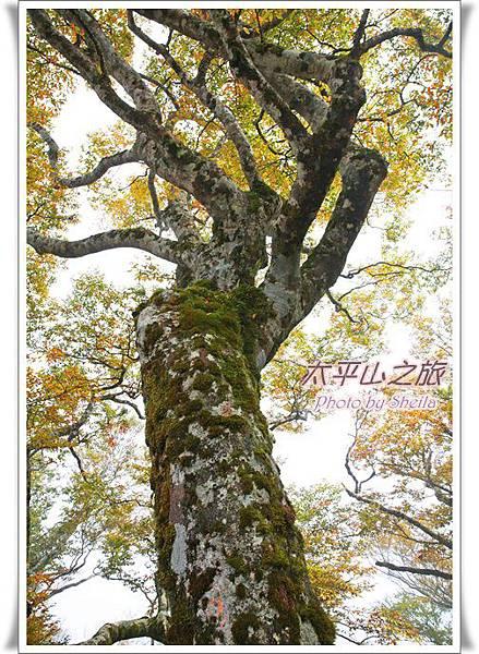 太平山246.JPG
