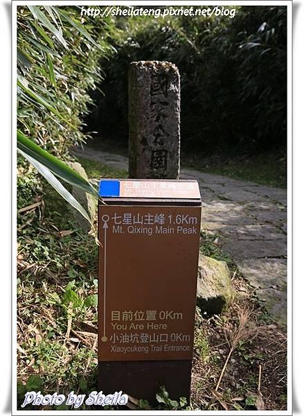 陽明山芒花15.JPG