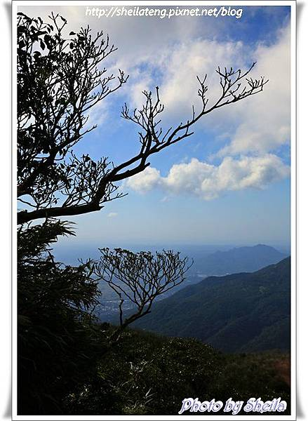 陽明山芒花34.JPG