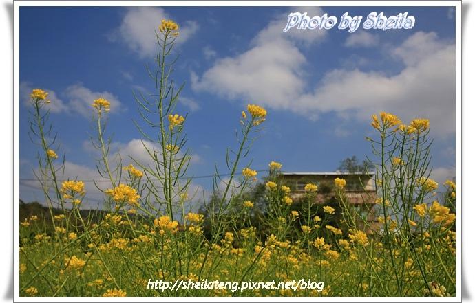 鄉村風景3.JPG