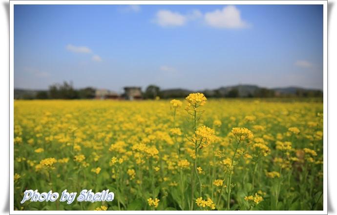 鄉村風景10.JPG