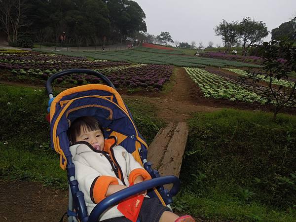 大溪花園農場2.jpg