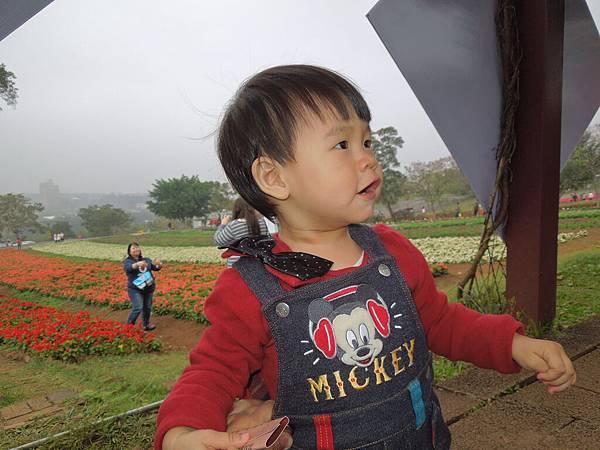 大溪花園農場4.jpg
