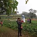 大溪花園農場9.jpg