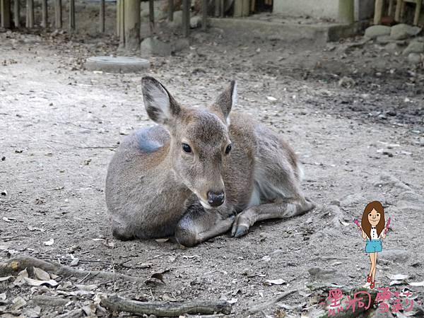奈良公園-26.jpg