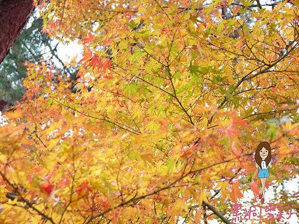 奈良公園-32.jpg