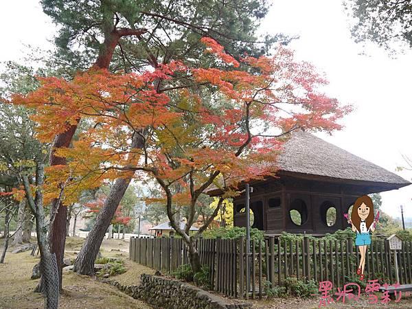 奈良公園-31.jpg