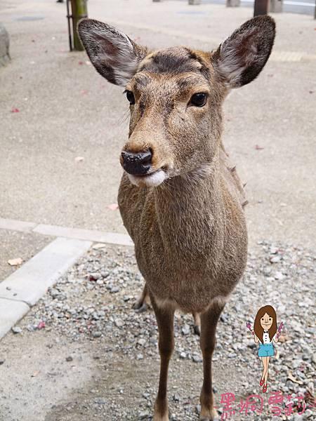 奈良公園-41.jpg