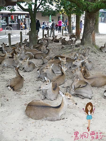 奈良公園-50.jpg