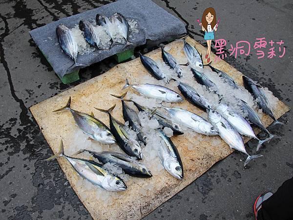 成功漁港-01.jpg