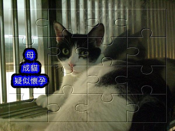 CIMG4539 .jpg