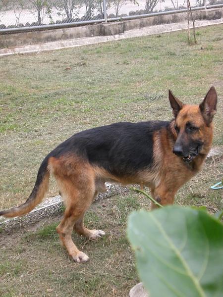 公成犬C.JPG