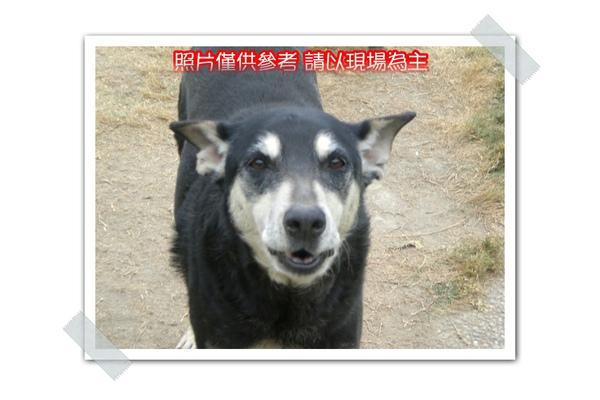 CIMG8348~.jpg