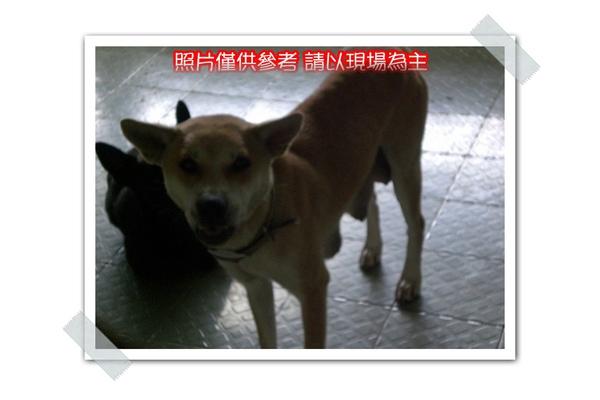 CIMG8455~.jpg