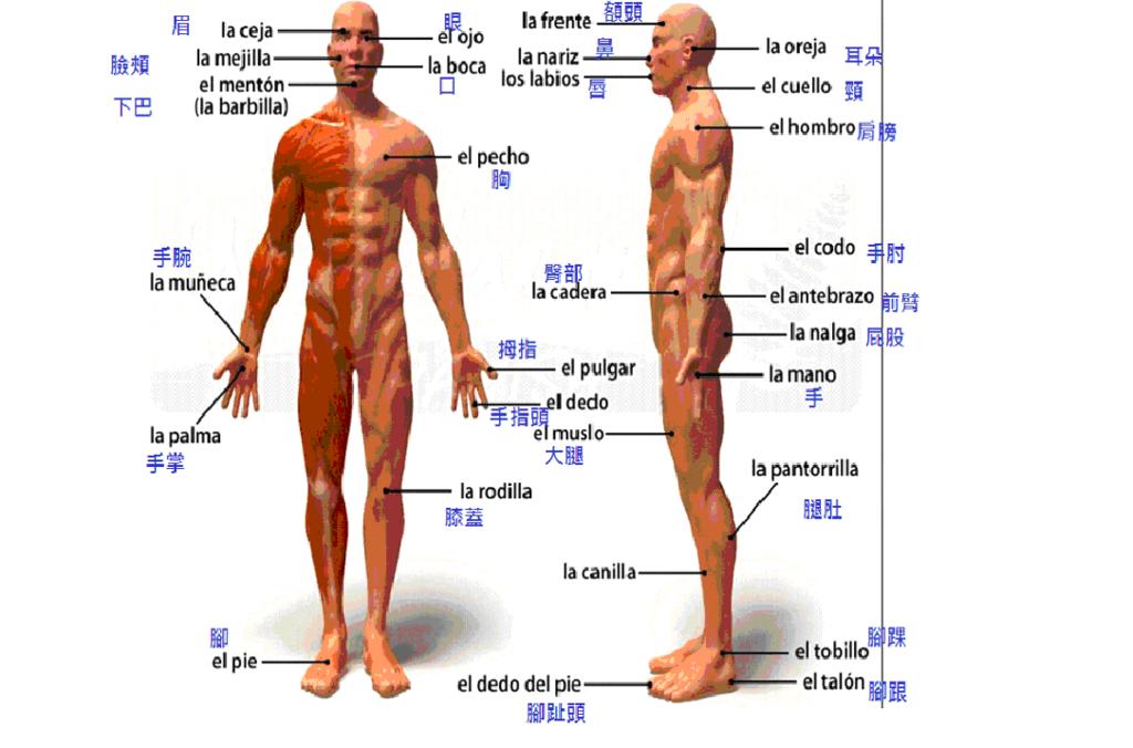 身體側面.jpg