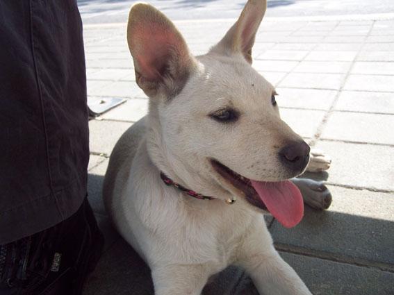 在車站外面巧遇的狗