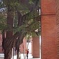 高雄中山大學