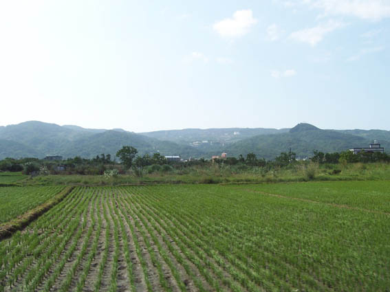 11沿海農田.jpg