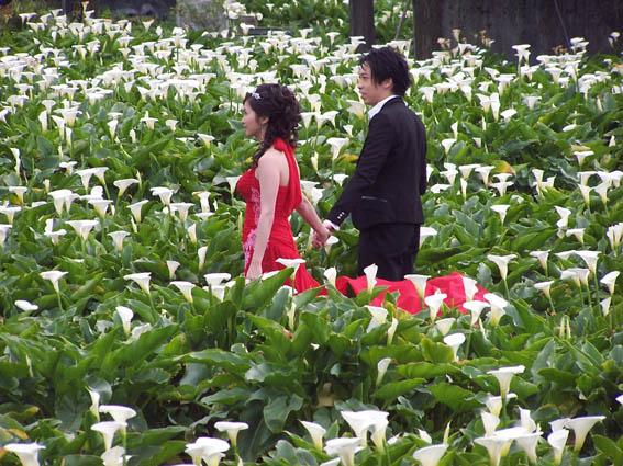 16有人在拍婚紗.jpg