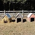 三隻小豬的家:稻草屋、木屋、磚屋