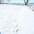 雪地裡的足跡