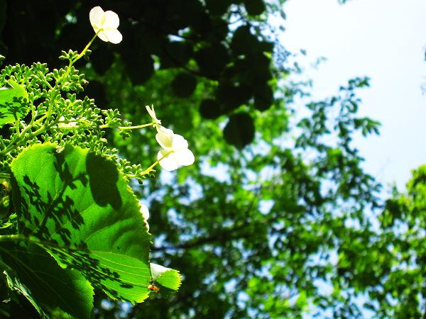 2010-06-19Takino 038.JPG