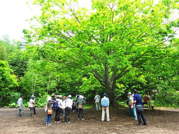 2010-06-19Takino 062.JPG