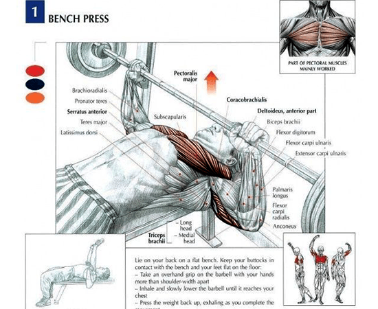 Benchpress-Exercise-Muscles-Affected