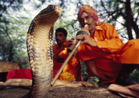 snake001.jpg