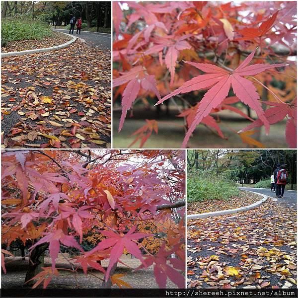 20121201-02代代木公園2
