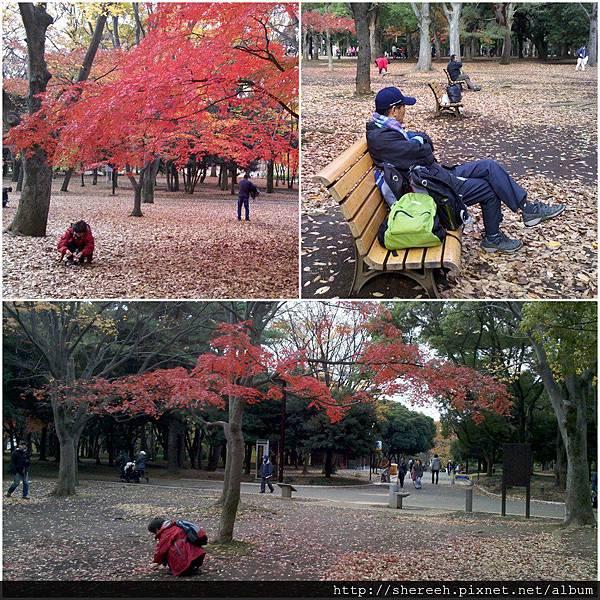 20121201-04代代木公園4