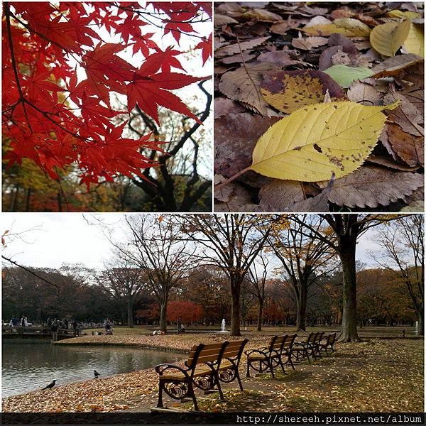 20121201-05代代木公園5