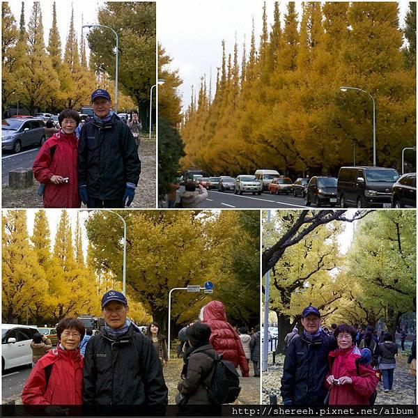 20121201-06神宮外苑1
