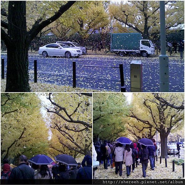 20121201-11神宮外苑6