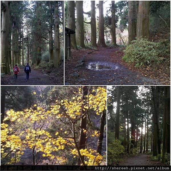 20121203-18衫並木步道