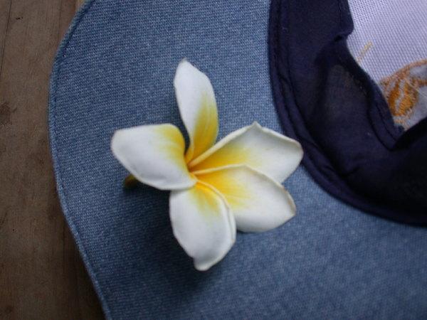 最愛的緬槴花