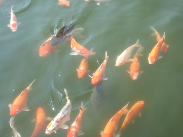 明湖水樣會館5.JPG