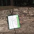 紫檀V-S花梨木~高級家具