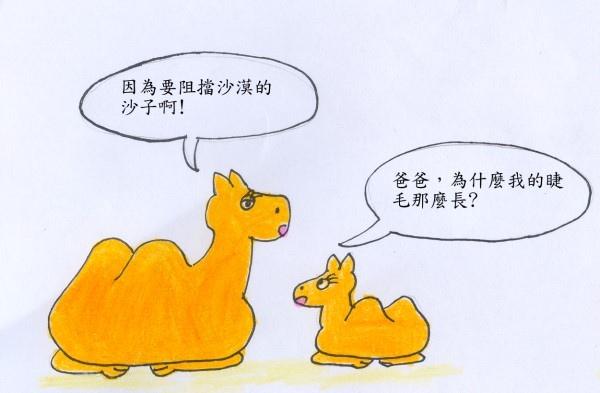 駱駝1.jpg