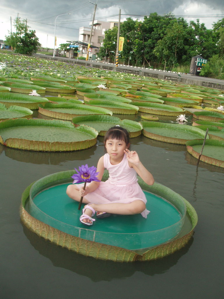 2011-08-16_02_台南白河_蓮緣蓮花池_02_蓮花仙子.jpg
