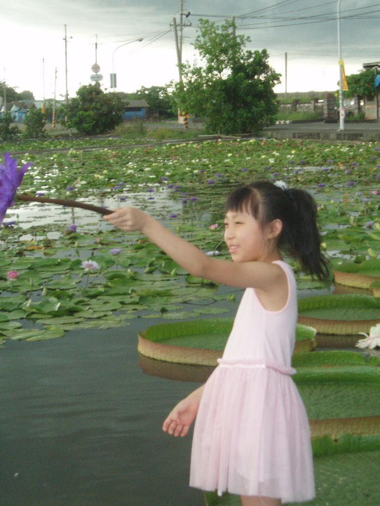 2011-08-16_02_台南白河_蓮緣蓮花池_06_蓮花仙子.jpg