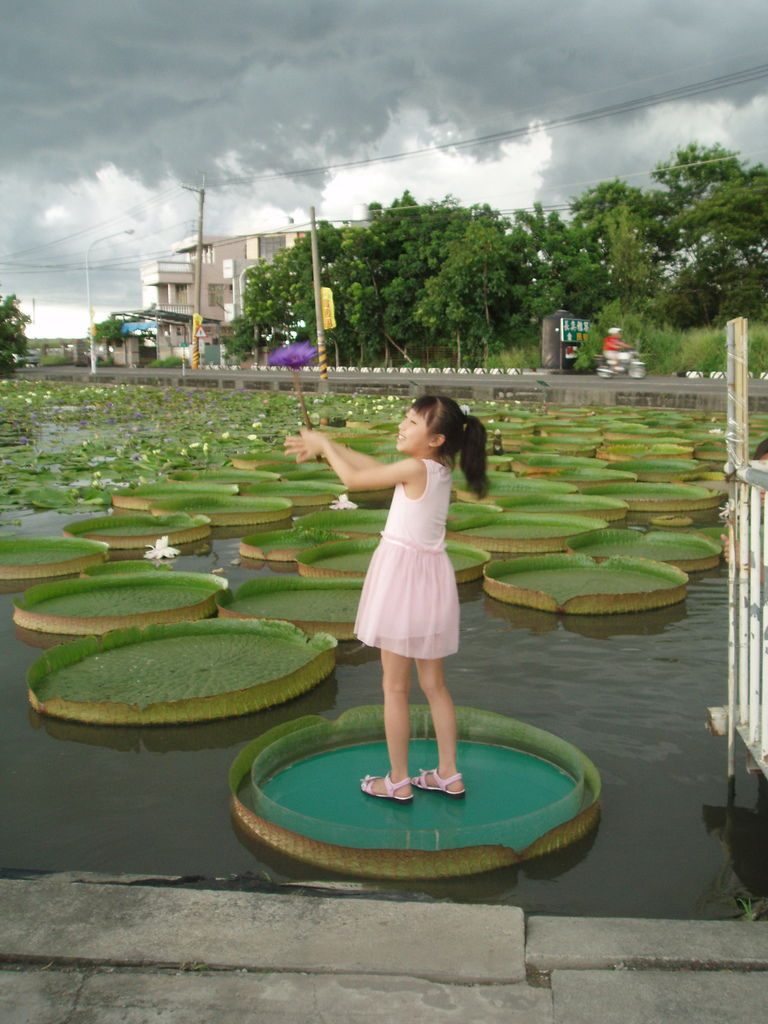 2011-08-16_02_台南白河_蓮緣蓮花池_08_蓮花仙子.jpg
